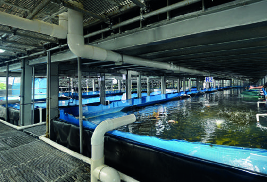 Fact Sheet Floating Ponds.Compressed 8